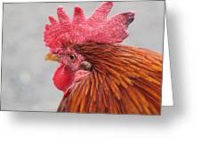 Kauai Rooster Greeting Card