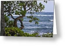 Kauai Shores Greeting Card