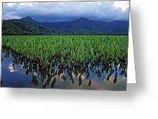 Kauai Taro Field Greeting Card