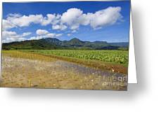 Kauai Wet Taro Farm Greeting Card