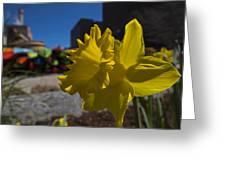 Kayak Launch Daffodil Cambridge Ma Greeting Card