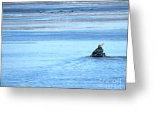 Kayaker And Geese Greeting Card