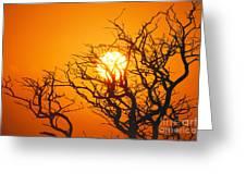 Keawe Tree At Sunset Greeting Card