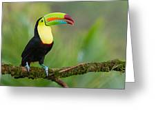 Keel Billed Toucan Perched On A Branch In The Rainforest Greeting Card