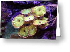 ...keep Your Anemones Closer Greeting Card