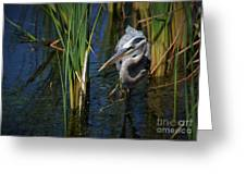 Keeping An Eye Out For Fish Greeting Card
