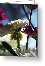 Keeping In The Sunlight... Greeting Card
