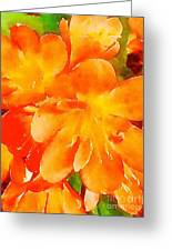 Kaffir Lily Blossoms Greeting Card