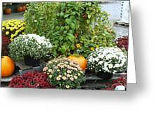 Kelly Garden Mums  Pumpkins And Duck Or Goose Greeting Card