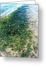 Kelp At Low Tide Line Greeting Card