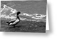 Kemah Duck Greeting Card