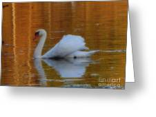 Kensingtons Swan 1  Greeting Card