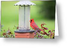 Kentucky Cardinal  Greeting Card