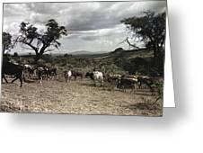 Kenya: Cattle, 1936 Greeting Card