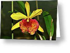 Keowee Newberry Orchid 001 Greeting Card