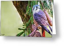 Kestrel On The Cones Greeting Card