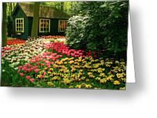 Keukenhof's Tulips Greeting Card