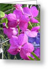 Kew Orchid Greeting Card