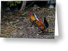 Key West Chickens Greeting Card