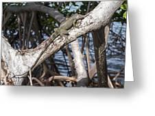 Key West Iguana In Mangrove 3 Greeting Card