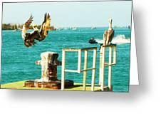 Key West Landing Greeting Card