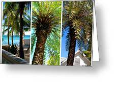 Key West Palm Triplets Greeting Card by Susanne Van Hulst