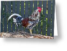 Key West Rooster 2 Greeting Card