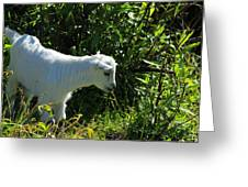 Kid Goat In Bushes Greeting Card