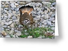 Kildeer And Nest Greeting Card