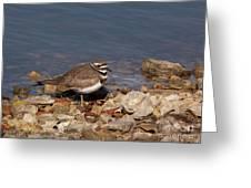 Kildeer On The Rocks Greeting Card