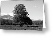 Killarney National Park, County Kerry, Ireland Greeting Card