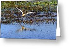 Killdeer Coming In For A Landing Greeting Card
