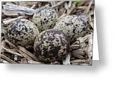 Killdeer Eggs Greeting Card