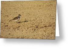 Killdeer In The Grass #3 Greeting Card