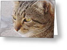 King Cat Greeting Card