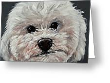 King Cavalier And Toy Poodle Mix Greeting Card