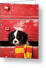 King Charles Cavalier Puppy  Greeting Card