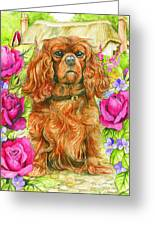 King Charles Spaniel Greeting Card