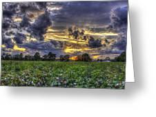 King Cotton Sunset Art Statesboro Georgia Greeting Card