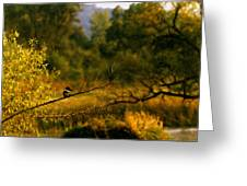 King Fisher Greeting Card