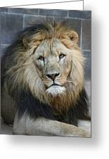 King In Exile Greeting Card