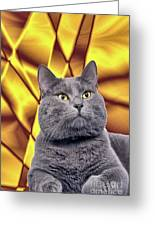 King Kitty With Golden Eyes Greeting Card