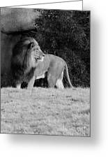 King Of Beasts Black And White Greeting Card