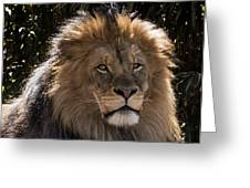 King Of Beasts Greeting Card