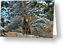 King Of The Canadian Rockies Greeting Card