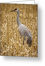 King Of The Delta Cornfield Greeting Card