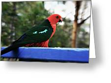King Of The Parrots Greeting Card