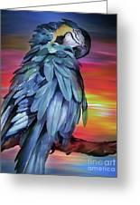 King Parrot 01 Greeting Card