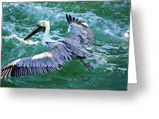 King Pelican Greeting Card