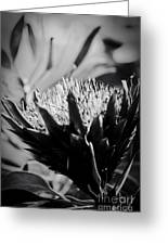 King Protea Exotic Tropical Flowers Greeting Card